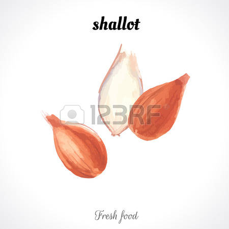 505 Shallot Cliparts, Stock Vector And Royalty Free Shallot.