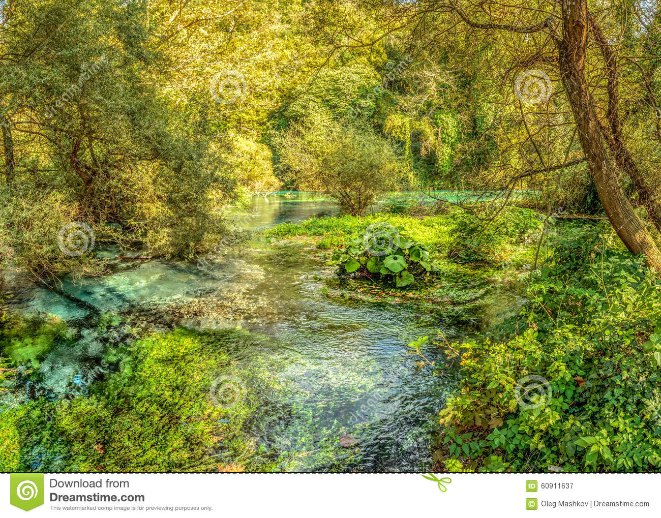 Shallow River In Spring Forest, Source Of Bistice River, Near Bl.
