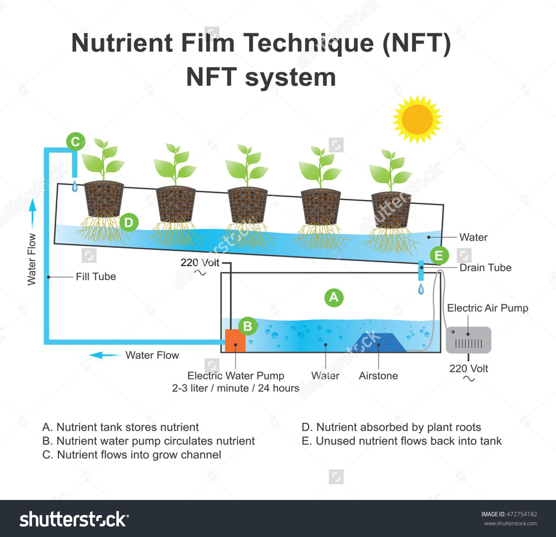 Nutrient Film Technique (Nft) Is A Hydroponic Technique Wherein A.