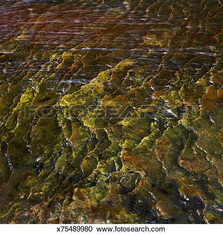 Stock Photography of Shallow stream running over a flat rock.
