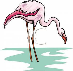 Flamingo Standing In Shallow Water.