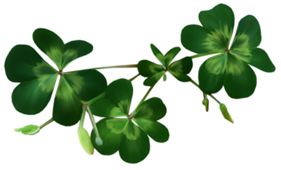 Irish Shamrocks PNG Clipart.