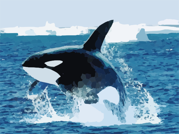 Shamu Killer Whale Clip Art at Clker.com.
