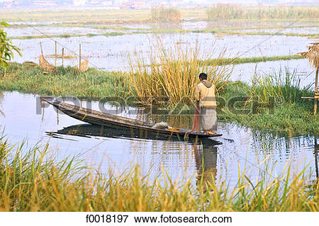 Picture of Myanmar, Shan state, Inle lake, fishing f0018197.