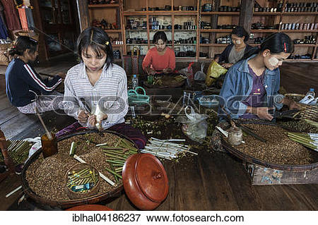 Picture of Local girls manufacturing cheroot cigars, Inle lake.