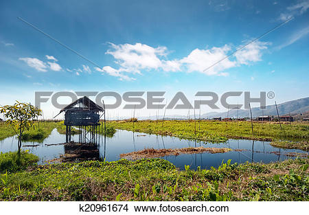 Stock Photo of Inle Lake Myanmar, Shan state. Floating gardens of.