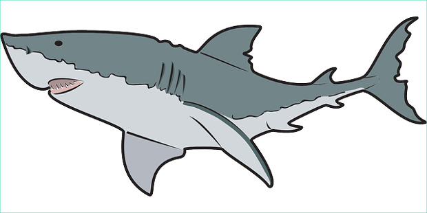 Shark clipart cliparts design trends.