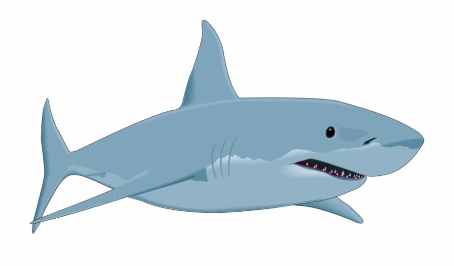 Shark Clipart Shark Fish Clipart Png Free Download.