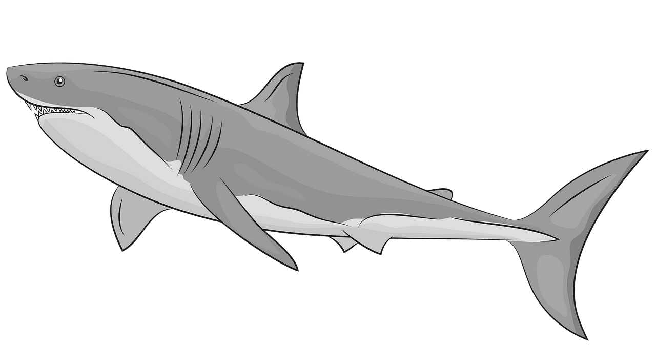 Great White Shark clipart. Free download..