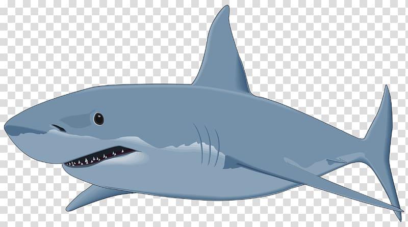 Great white shark , Shark transparent background PNG clipart.