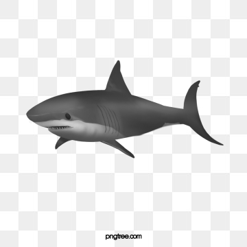 Shark Png, Vector, PSD, and Clipart With Transparent.