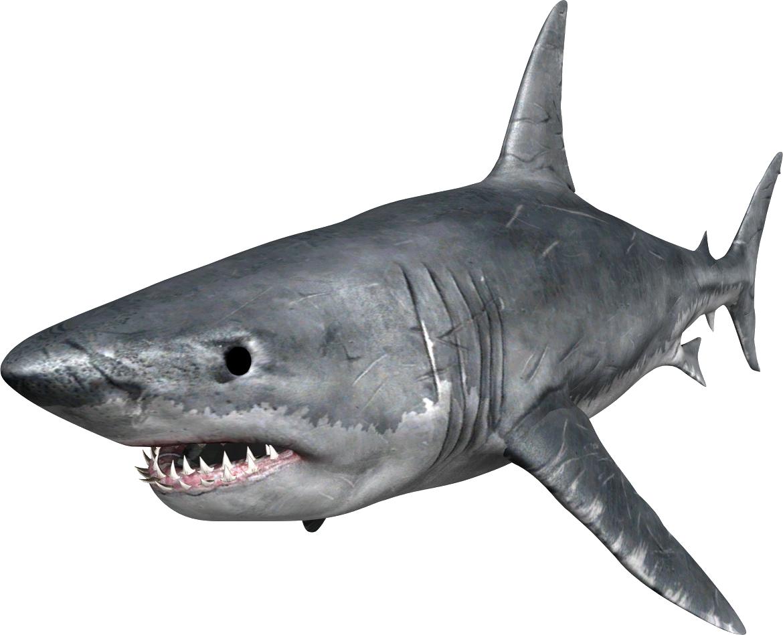 HQ Shark PNG Transparent Shark.PNG Images..