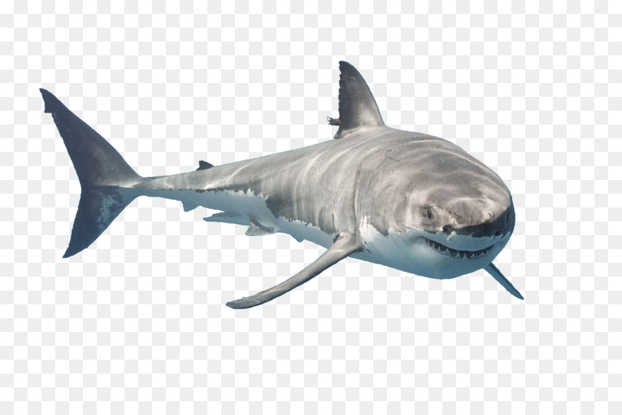 Great White Shark Png & Free Great White Shark.png.