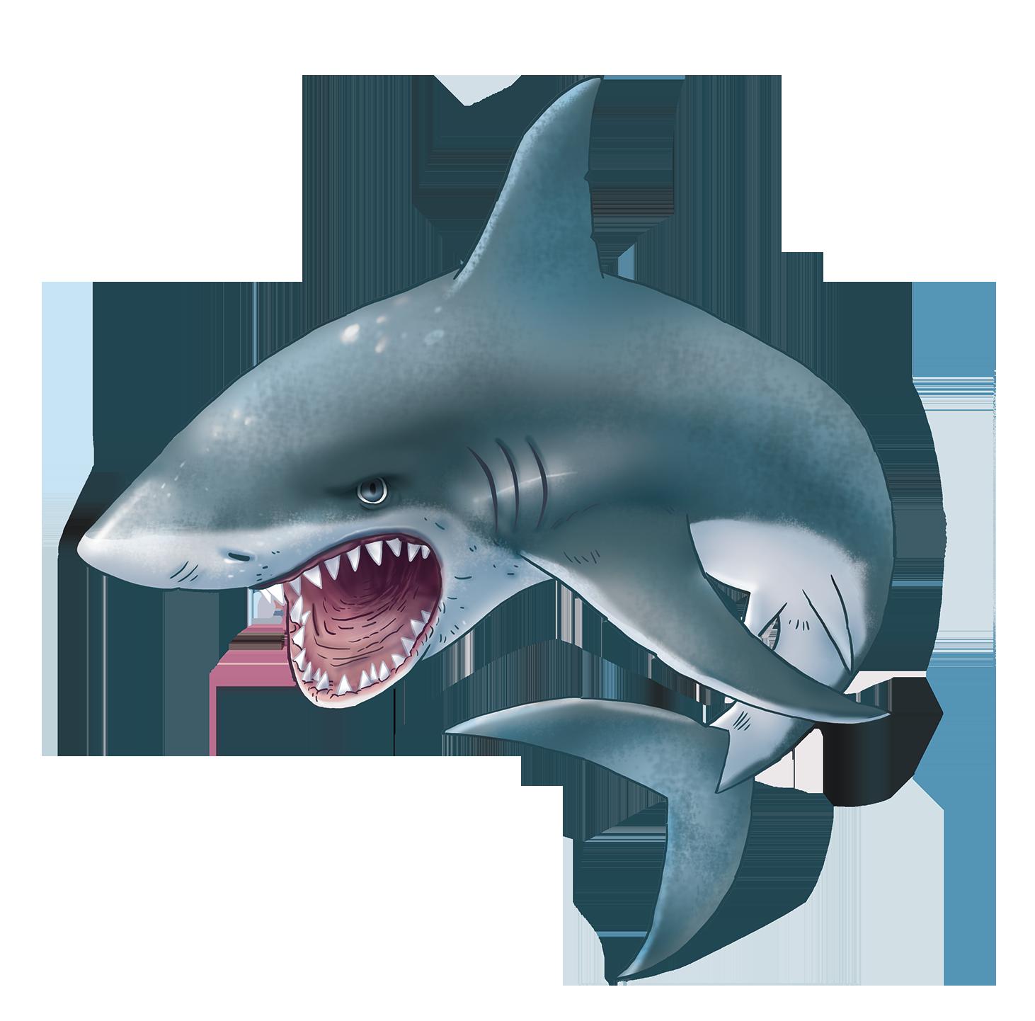 Sharks PNG images free download, shark PNG.
