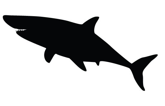 Shark silhouette vectors.