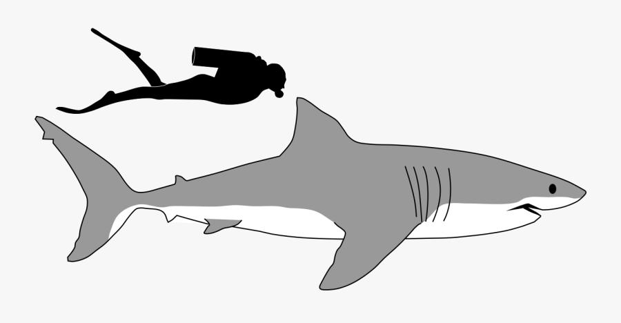 Transparent Shark Tail Clipart.