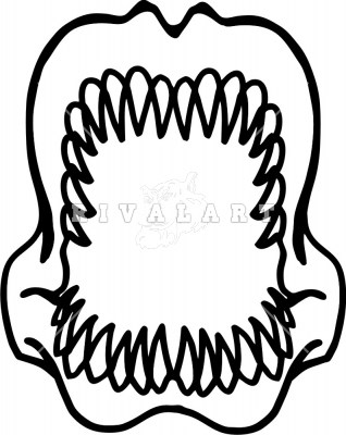 Shark teeth clipart 2 » Clipart Portal.