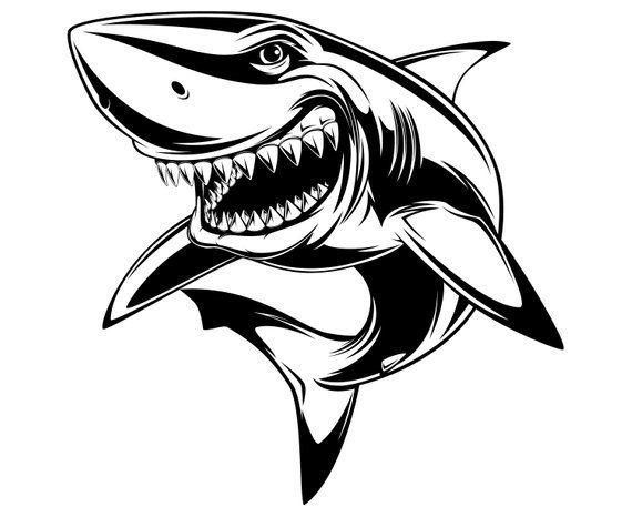 Shark, Cartoon, White shark, SVG,Graphics,Illustration.