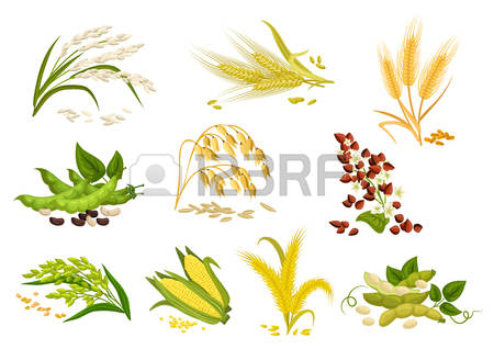 20,214 Rice Cliparts, Stock Vector And Royalty Free Rice Illustrations.