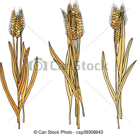 EPS Vector of vector set of cartoon doodle wheat sheaves.
