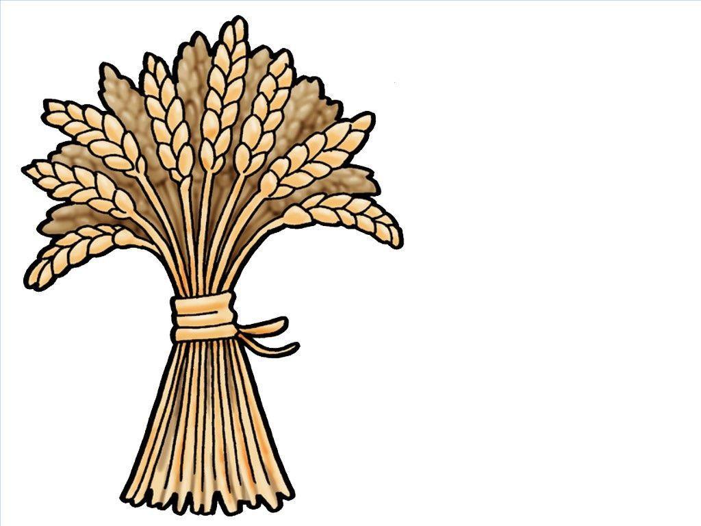 Sheaf of wheat..