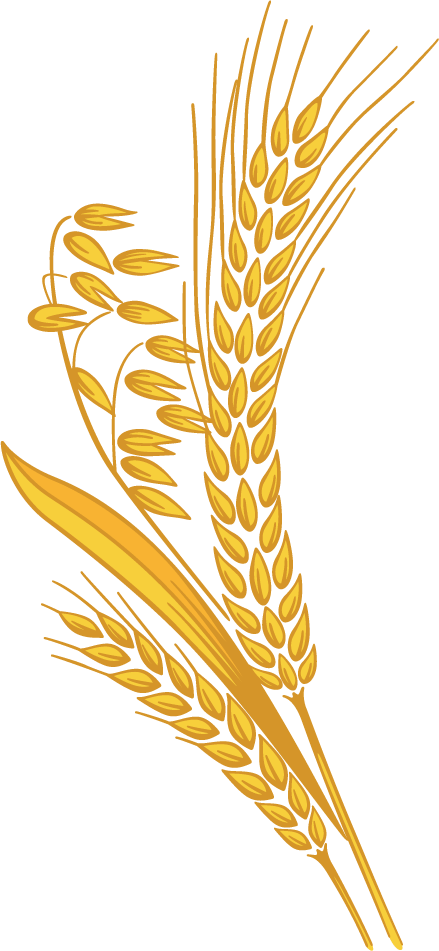 Corn clipart sheaf, Corn sheaf Transparent FREE for download.
