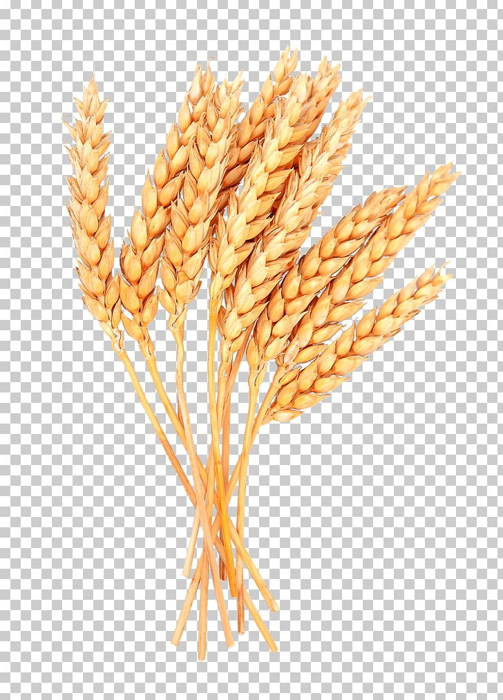 Sheaf Cereal Grain PNG, Clipart, Agriculture, Avena, Cereal.