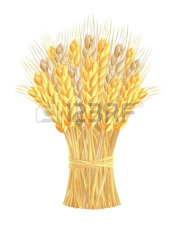 2,128 Sheaf Stock Vector Illustration And Royalty Free Sheaf Clipart.