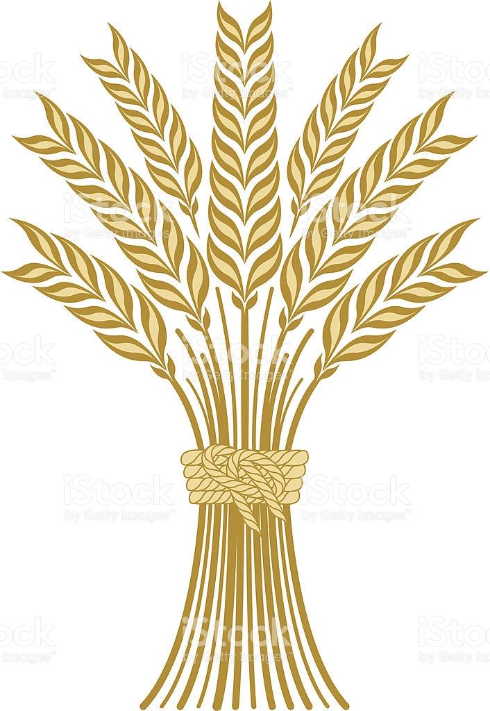 Wheat stock vector art 94301993.
