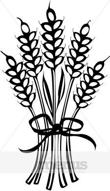 Wheat Sheath Clipart.