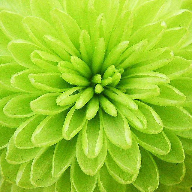 1000+ ideas about Green Flower Photos on Pinterest.