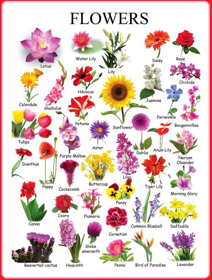 1000+ ideas about Types Of Flowers on Pinterest.