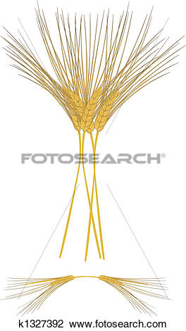Clipart of Sheaths of Barley k1327392.