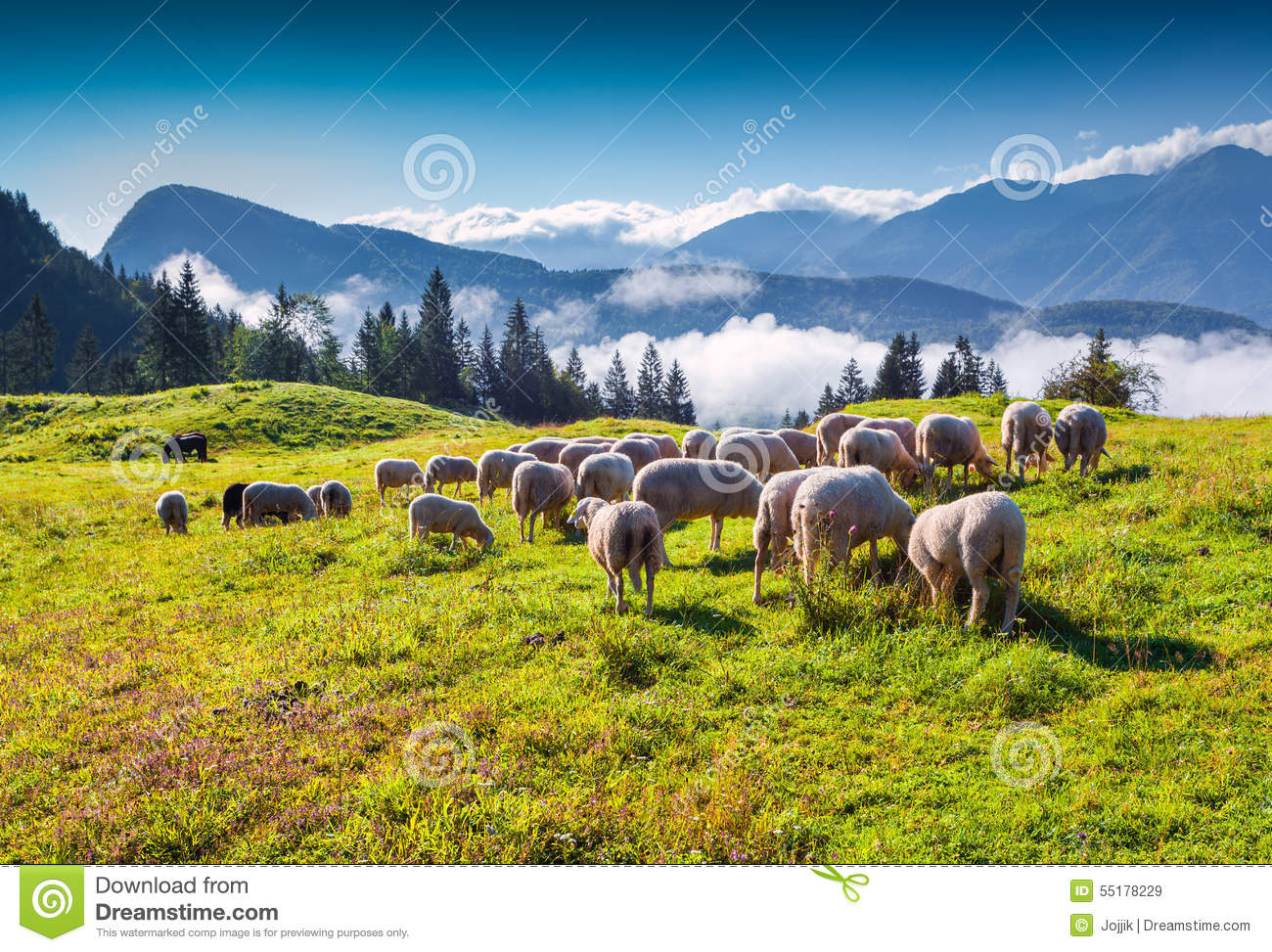 Sheep On Alpine Pasture In Sunny Summer Day. Stock Photo.