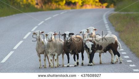 Lost Sheep Stock Photos, Royalty.