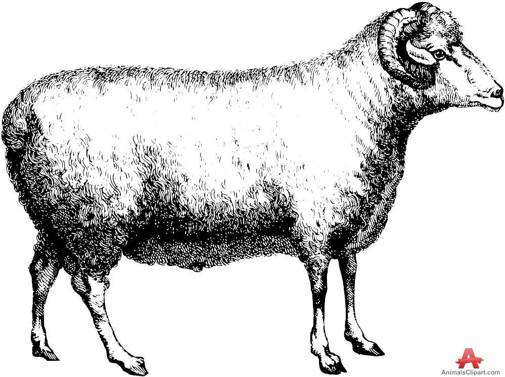 Animals Clipart of sheep.