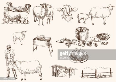 Sheep Breeding premium clipart.
