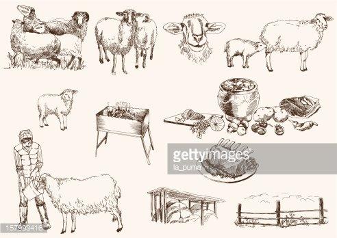 Sheep Breeding premium clipart.