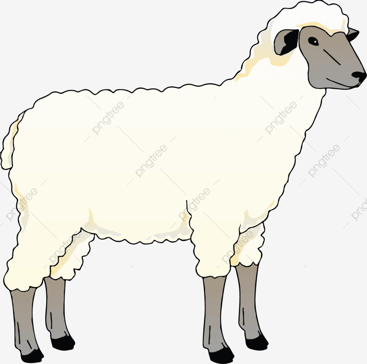 Sheep Clipart, Sheep Vector, Cartoon Vector, Sheep PNG and.