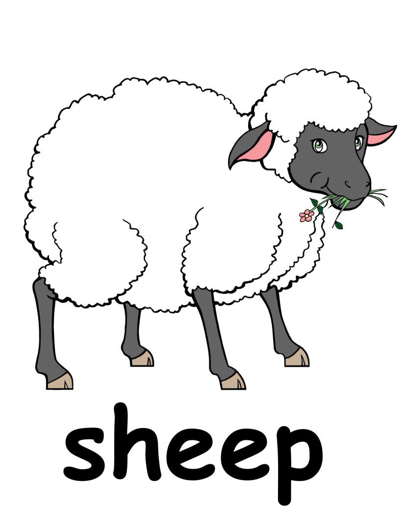 Best Sheep Clipart #17198.