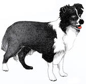 Sheep dog clipart.