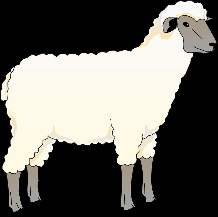 Free vector graphic: Sheep, Animal, Barn, Farm, Mammal.