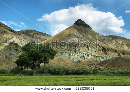 Fossil Bed Stock Photos, Royalty.