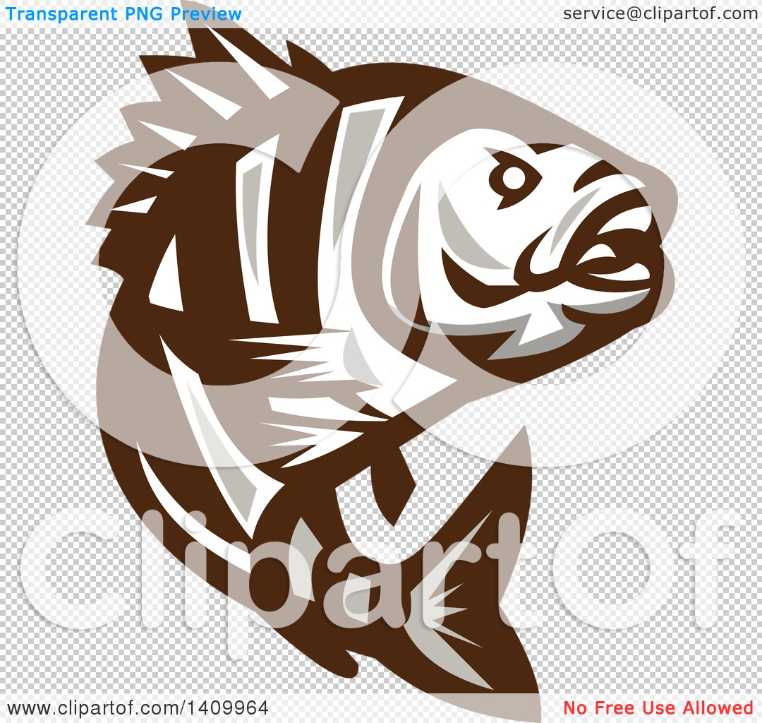 Clipart of a Retro Brown and White Jumping Sheepshead Fish.