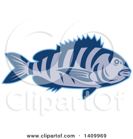 Clipart of a Retro Teal and White Jumping Sheepshead Fish.