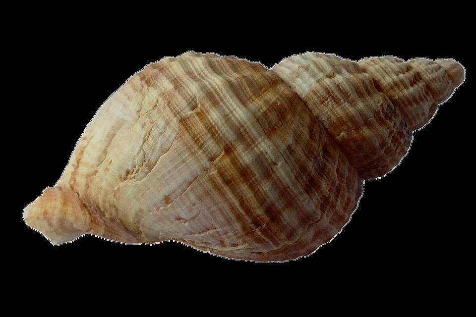 Mussel, Shells.