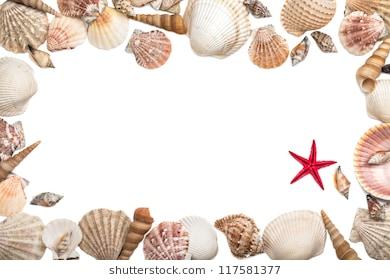 Seashell border clipart 5 » Clipart Station.