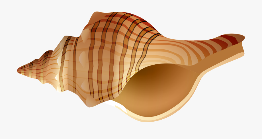 Shell Clipart Png.