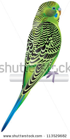 Budgerigar Pet Parakeet Shell Parakeet Budgie Stock Vector.