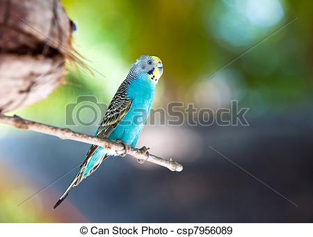 Stock Photographs of Nest out of focus and a shell parakeet on a.